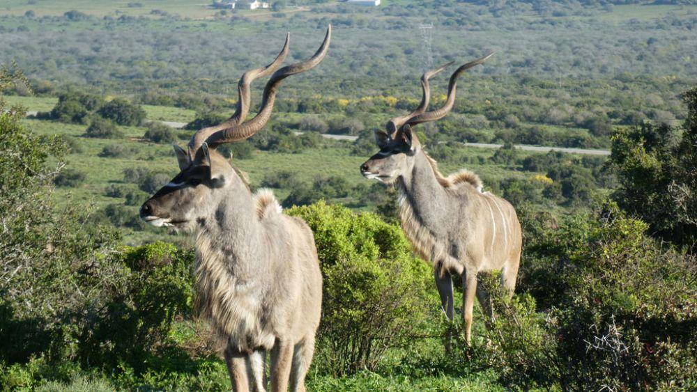 antilopen-addo-elephant-park