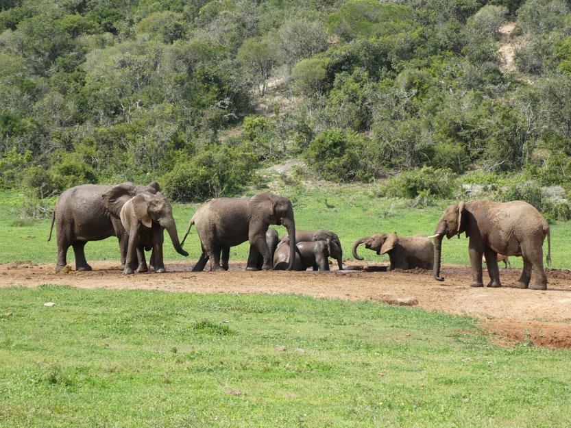 beitragsbild-addo-elephant-park
