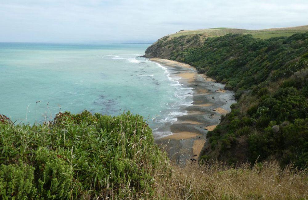 blue-penguin-colony-oamaru