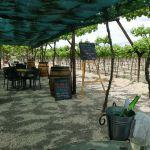 de-krans-wine-calitzdorp-3