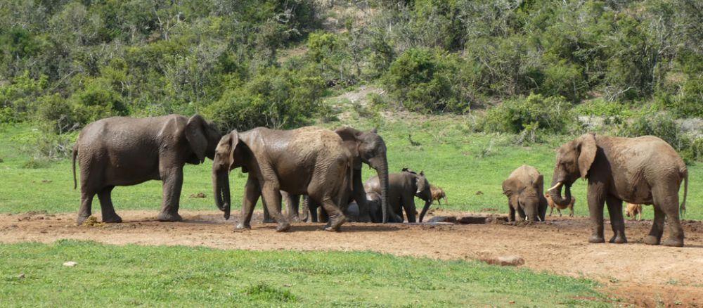 elefanten-addo-elephant-park
