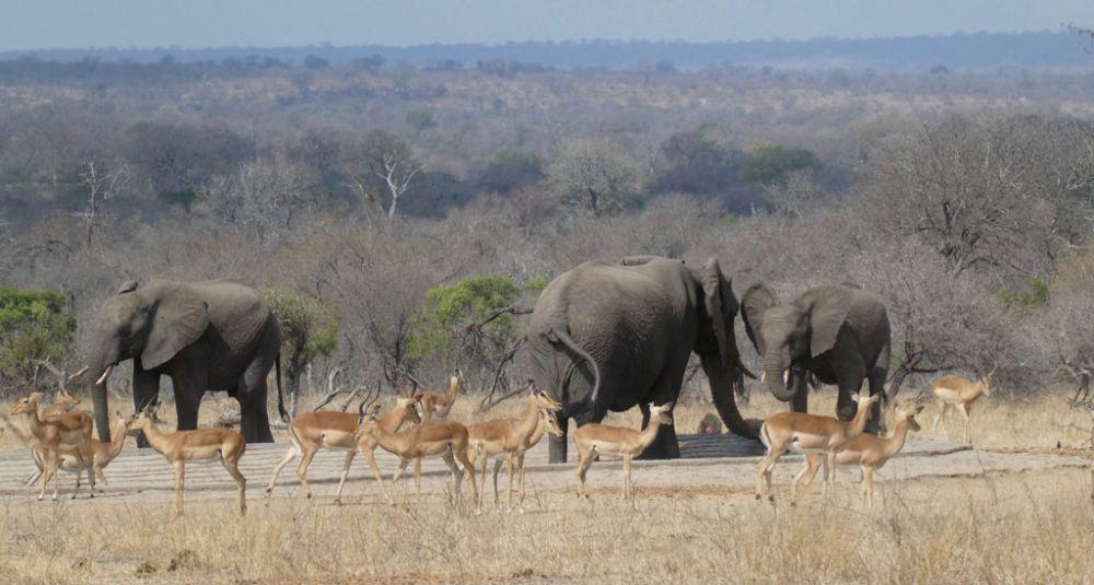 elefanten-antilopen-kruger-national-park