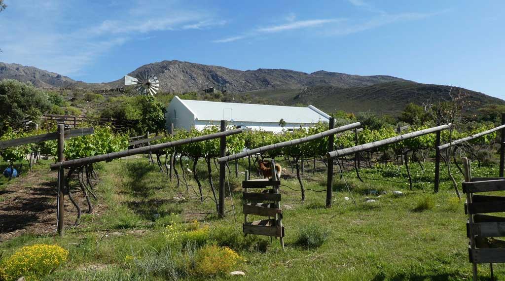 kogman-keisie-guest-farm-montagu-4